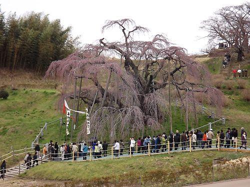 0425a滝桜056.jpg